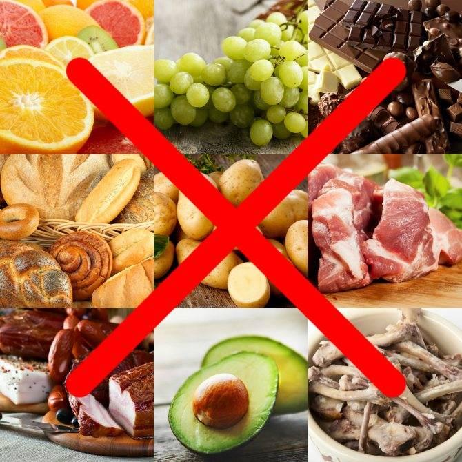 10 продуктов питания, которые нельзя давать своим детям