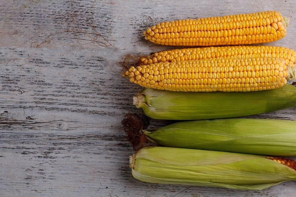 Кукуруза при грудном вскармливании: польза и вред