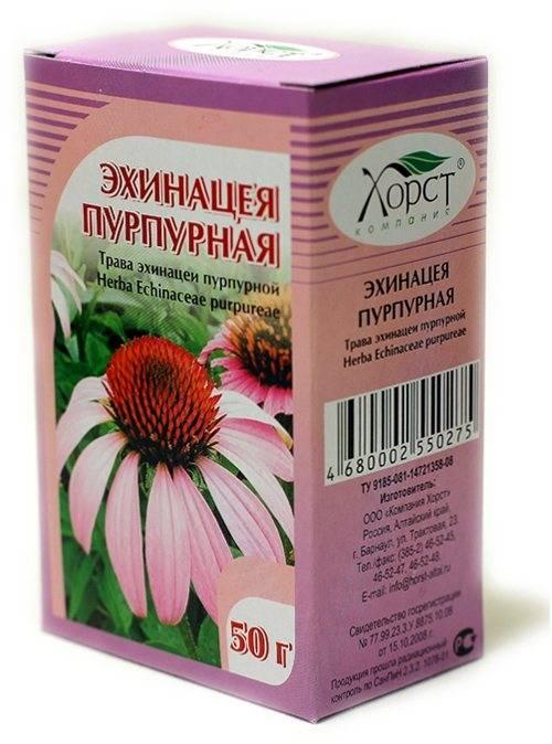Топ-9 лечебных свойств эхинацеи — от простуды до рака
