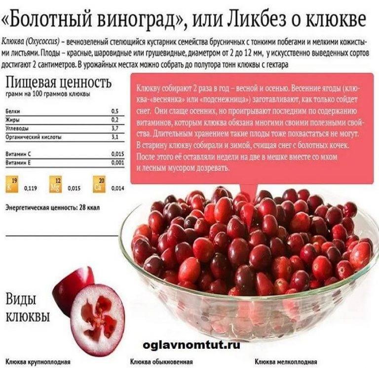 Клюквенный морс для ребенка 1 год рецепт. морс из клюквы детям до года