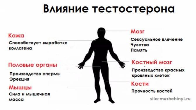 Тестостерон общий