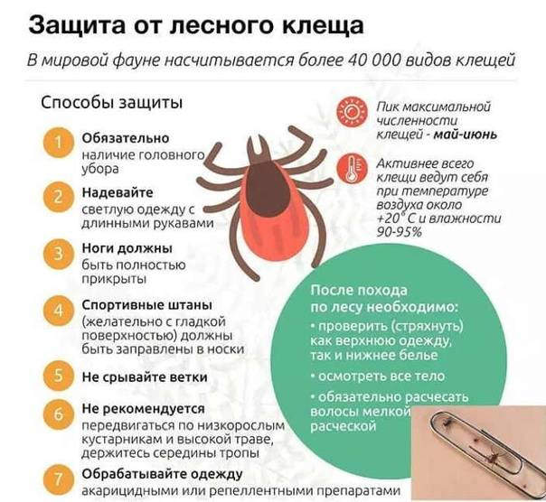 Обработка участка от клещей: топ-10 средств для обработки дачи