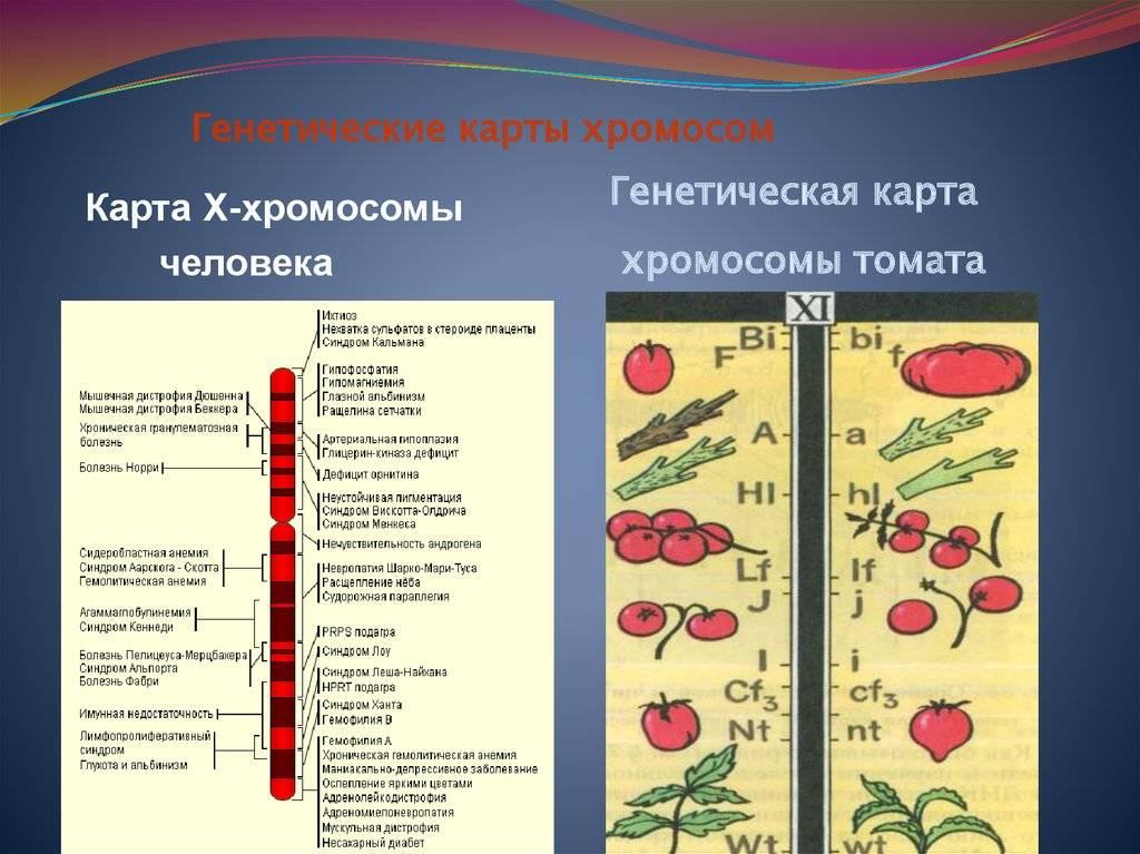Пренатальная диагностика патологии плода   клиника семейный доктор
