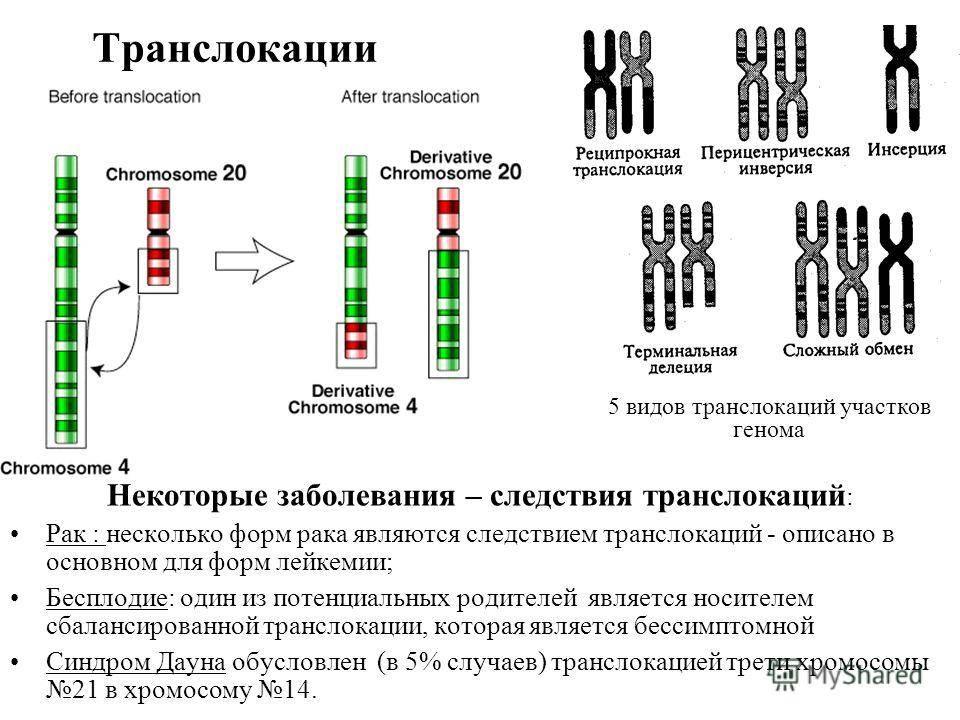 Паспорт хромосом. можно ли спрогнозировать генетический сбой?