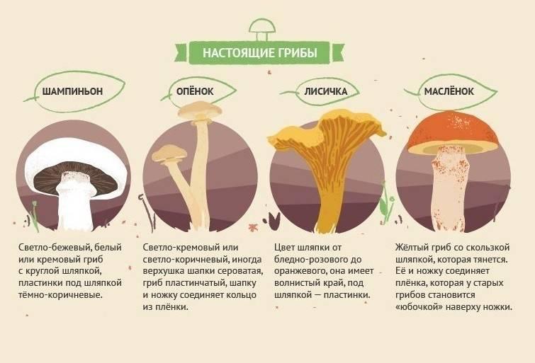 4 совета по введению грибов и грибного супа в рацион малыша
