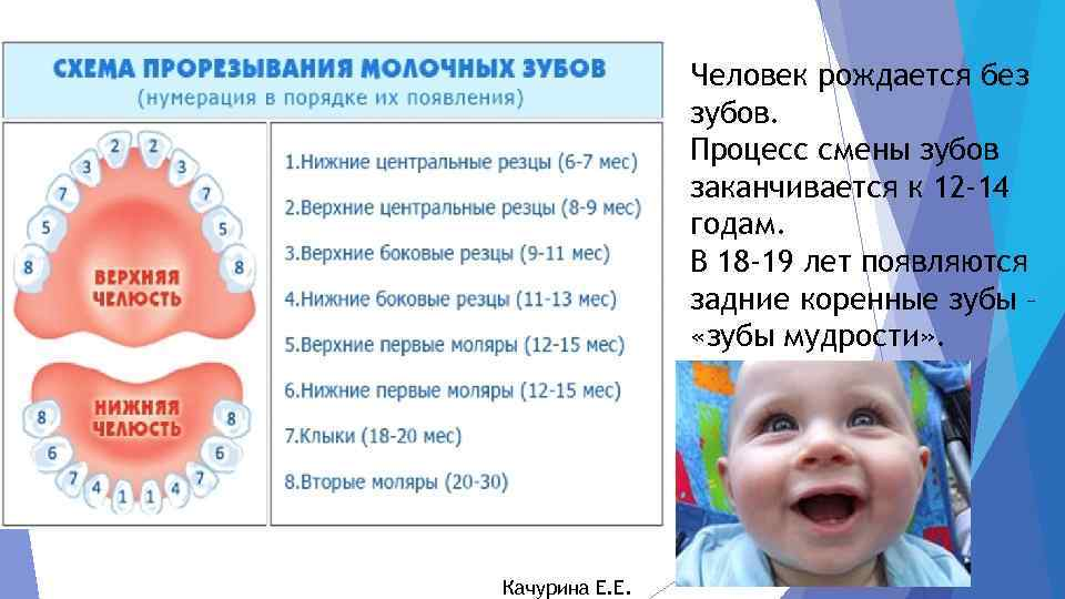 Прорезывание зубов у детей - когда у детей режутся первые зубы: календарь, симптомы, поведение - agulife.ru