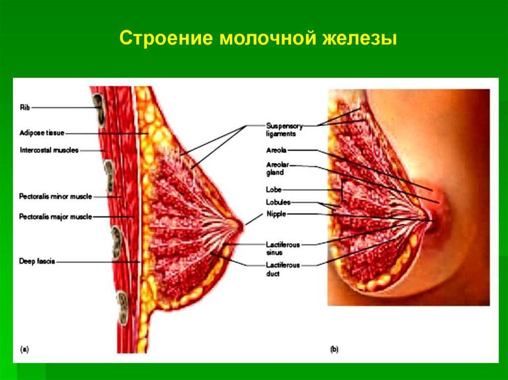 Длительное грудное вскармливание