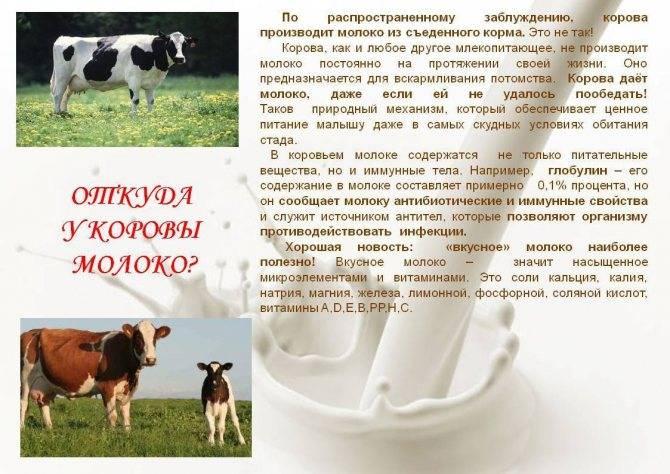 В чем вред коровьего молока для детей до года?