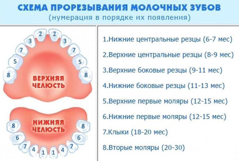 Коренные зубы у детей – симптомы прорезывания зубов, осложнения, уход