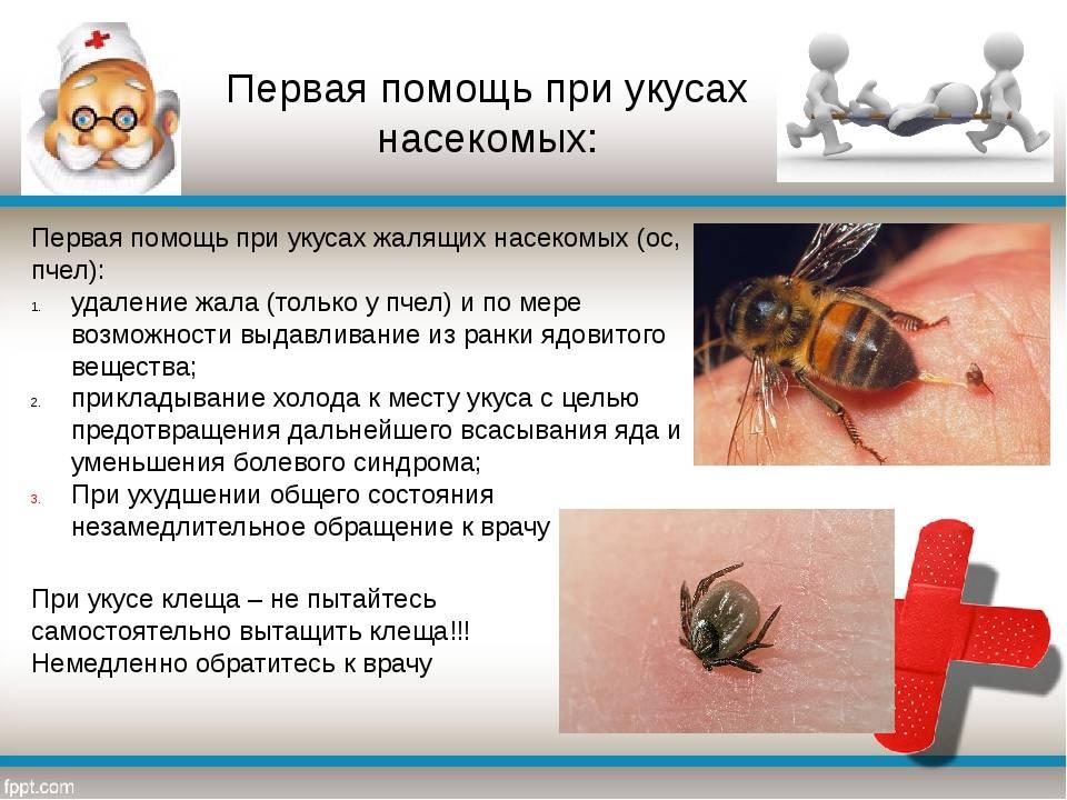 Аллергия на укусы комаров, ос и пчел: как выглядит и что делать? комариные укусы у детей