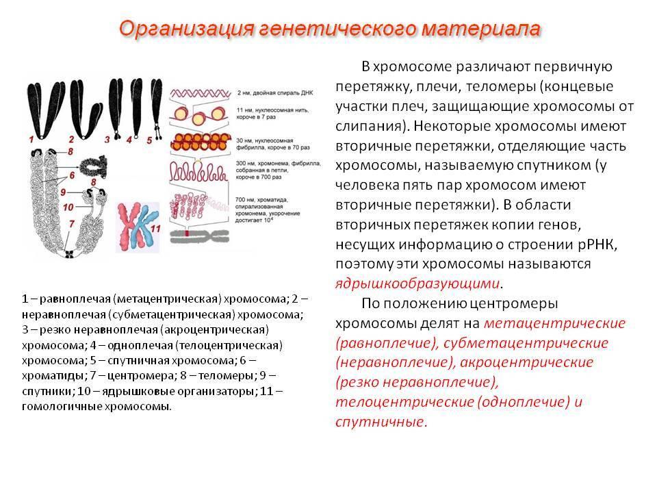 Анализ крови на хромосомные патологии