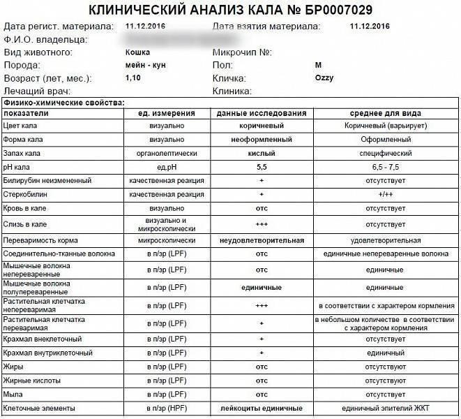 Как сдать копрограмму ребенку | детские анализы в медицинской лаборатории эндомедлаб  (г. москва, м. дмитровское, м. борисово)