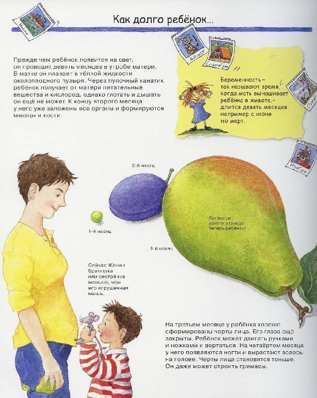 Как объяснить ребенку, откуда берутся дети?