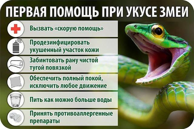 Укус змеи - первая помощь - курсы первой помощи
