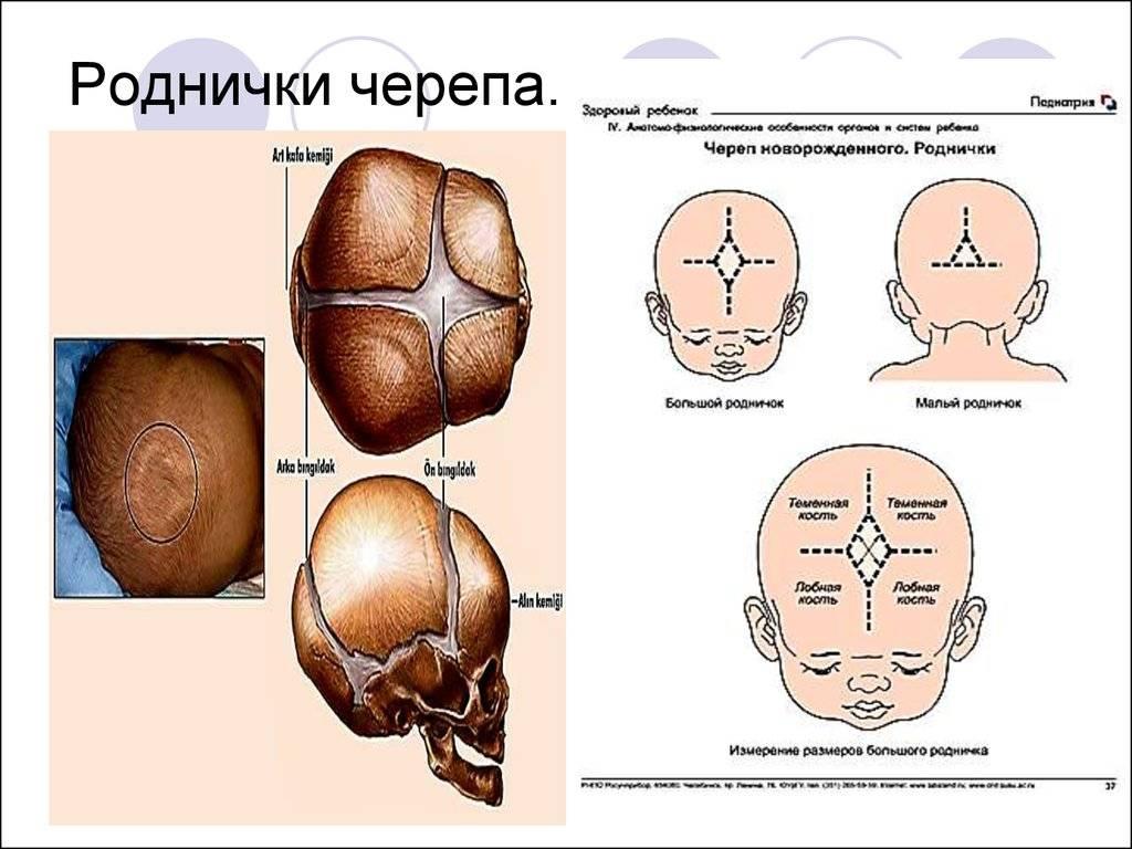 Почему у грудничка пульсирует родничок: причины явления