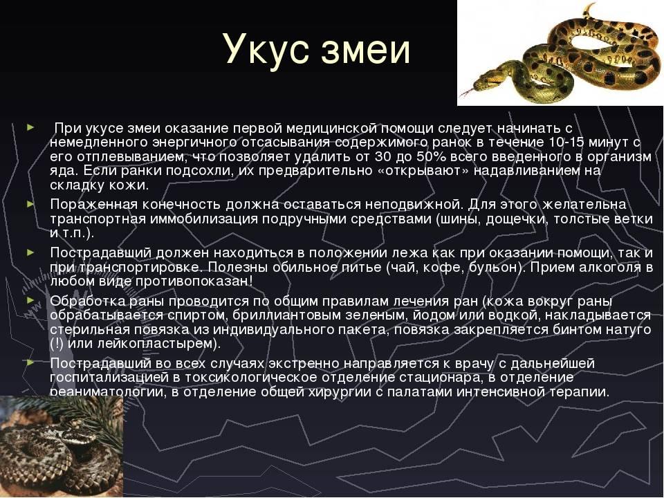 Укусы ядовитых змей, виды отравления змеиным ядом. что делать если укусила змея, первая помощь. :: polismed.com