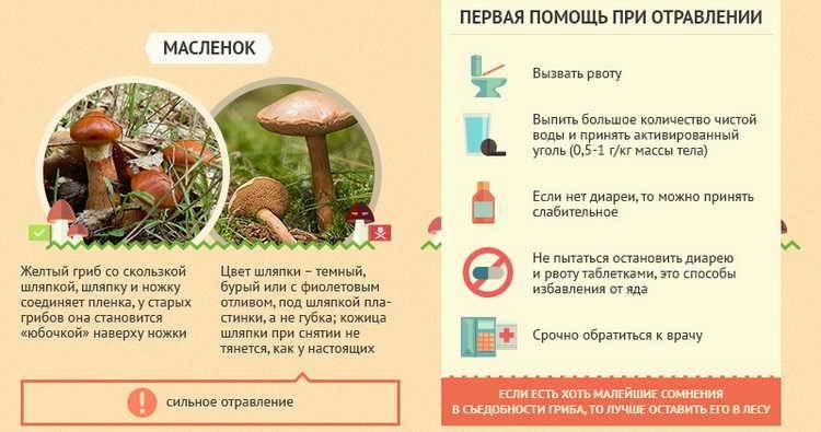 Можно ли грибы детям. грибы польза и вред.