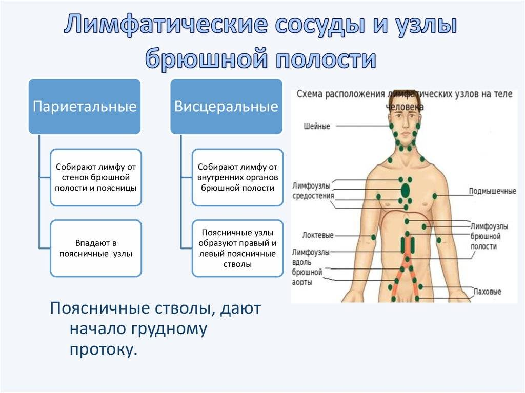 Почему увеличиваются лимфоузлы