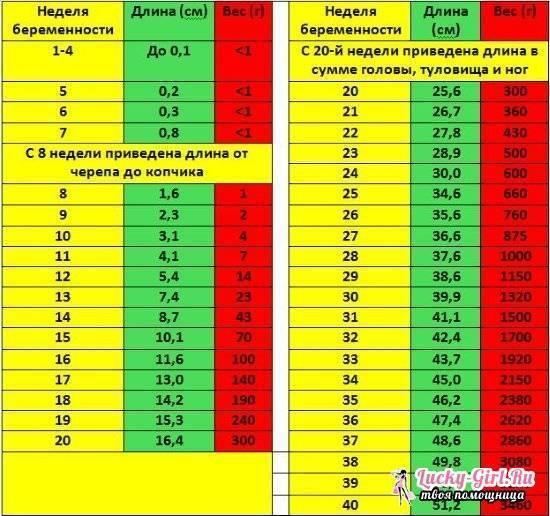 Нормы диаметра плодного яйца по неделям беременности таблица   плодное яйцо на 3,4,5, 6,7, 8, 9 неделе - probirka.org
