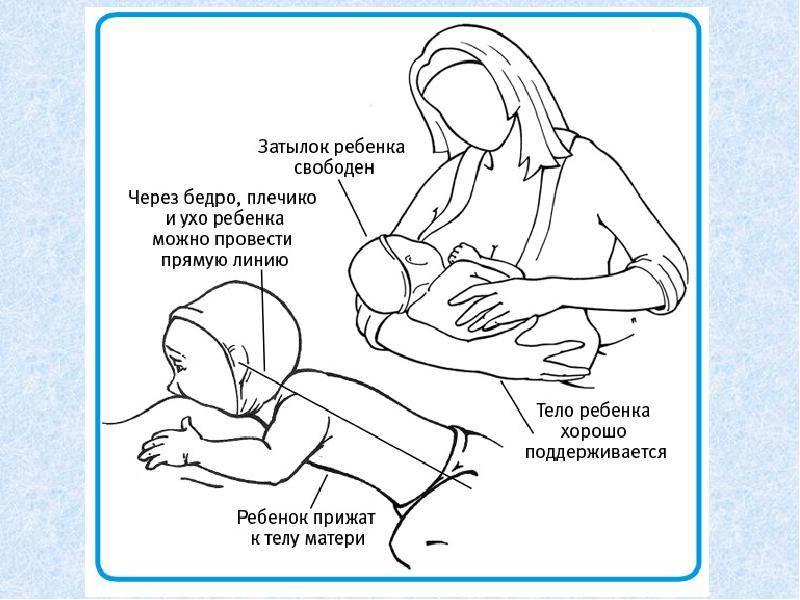 Режим грудного вскармливания новорожденного ребенка