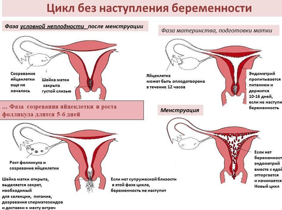 Диагностика бесплодия у мужчин и женщин по короткой программе