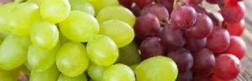 Можно ли молодой маме есть виноград при грудном вскармливании