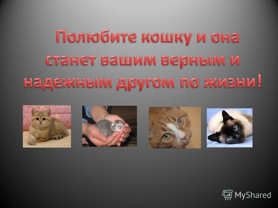 Почему кошки мурчат - когда их гладишь, рядом с человеком, перебирают лапами, что это значит, физиология