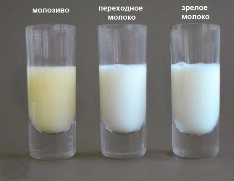 Состав грудного молока: как меняется его содержание по месяцам