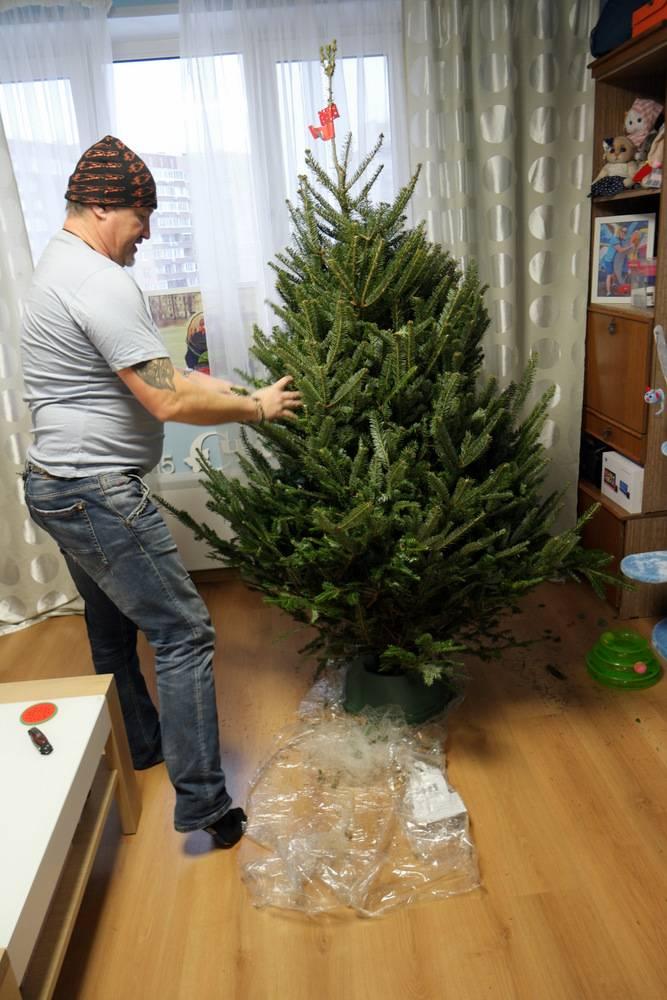 Наряжаем елку на новый год: когда принято ставить и убирать