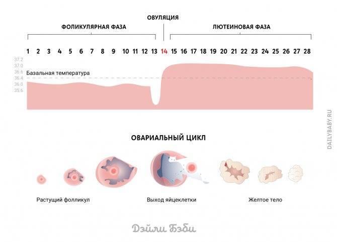 Боль внизу живота у женщин слева, справа: причины, диагностика, лечение в киеве