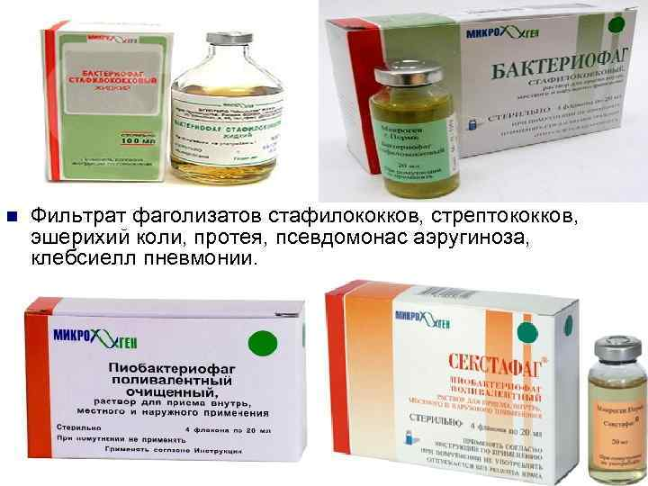 Стафилококк – стафилококковые инфекции