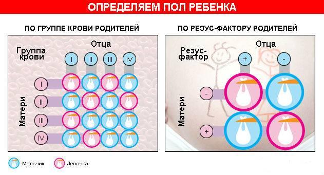 Мальчик или девочка? пол плода и узи. на какой неделе можно узнать пол ребенка?