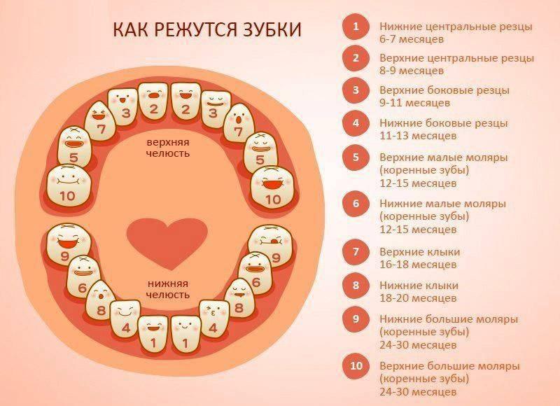 Со скольких месяцев режутся первые зубки и в какой последовательности