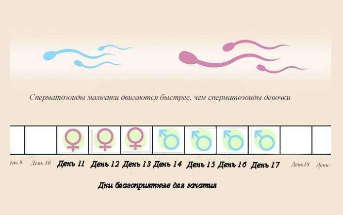 Па за 2 дня до овуляции. кто родится? (для зачатия!) - овуляция