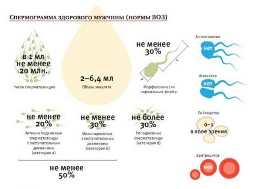 Как улучшить показатели спермограммы. какие факторы ухудшают сперматогенез. какие факторы способны улучшить сперматогенез. антиоксиданты и их роль в мужском бесплодии. какие витамины, аминокислоты  и микроэлементы используют для улучшения сперматогенеза.