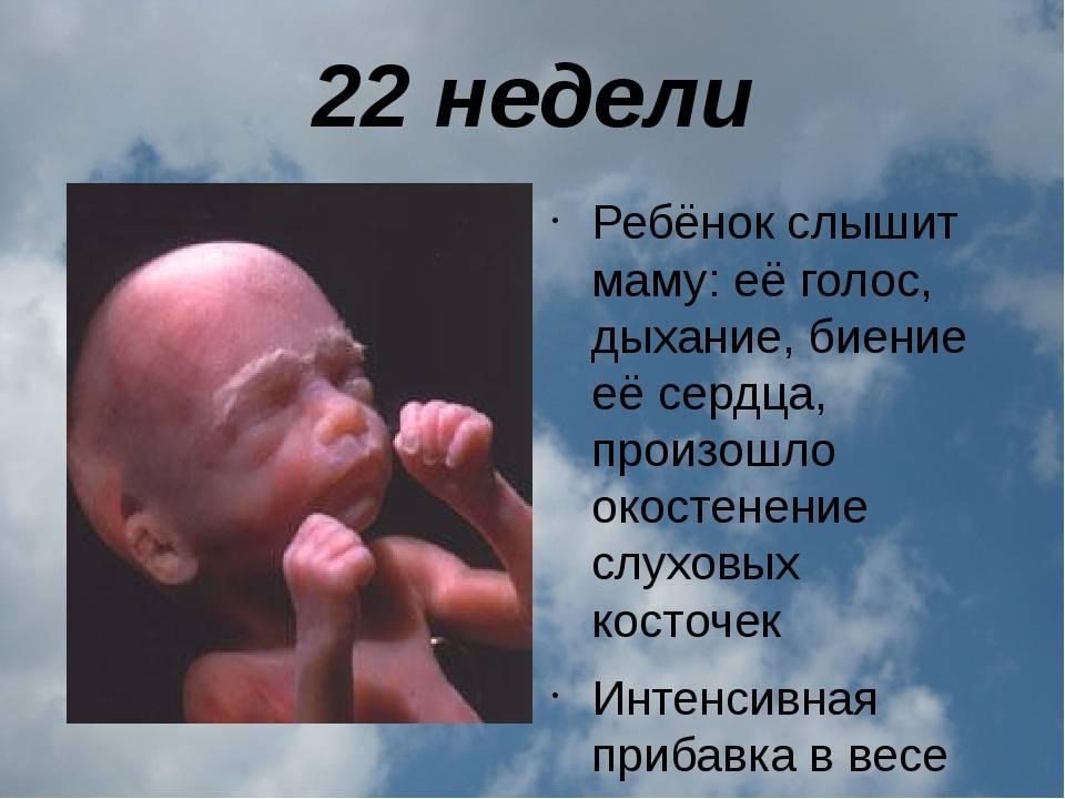 Беременность на сроке 22 недели. развитие малыша на 6 месяце