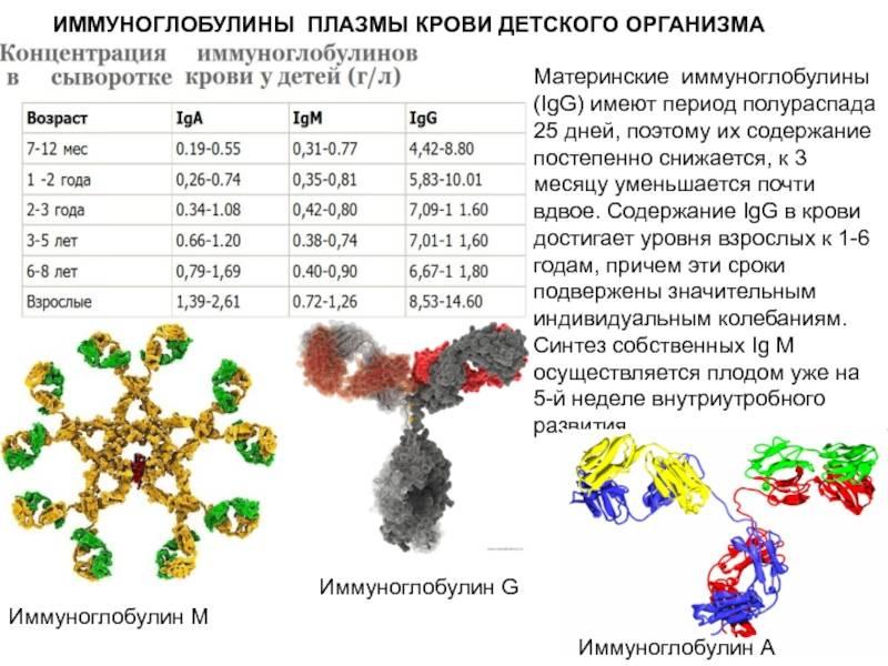 Суммарные иммуноглобулины e (ige) в сыворотке: исследования в лаборатории kdlmed