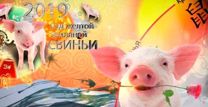 Подарки на год свиньи 2019 - лучшие новогодние подарки с символом
