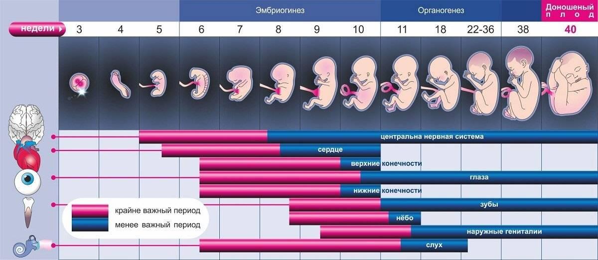 Узи на 4 неделе беременности: решаем вопрос рожать или не рожать?