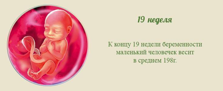 Развитие плода на 19-й неделе беременности, проблемы срока