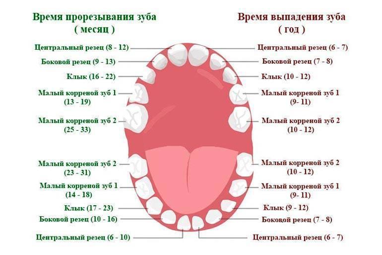 5 способов как обезболить зуб мудрости в домашних условиях