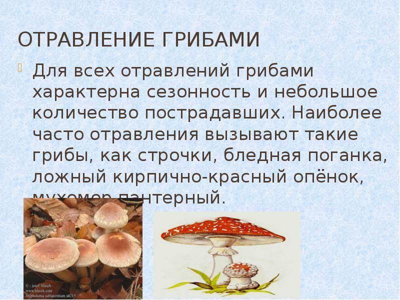 В каком возрасте можно давать грибной суп ребенку imother.su- все для будущей мамы