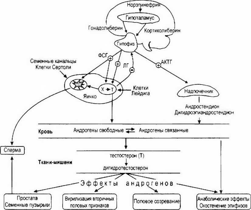 Анализы на гормоны щитовидной железы: все от подготовки до расшифровки