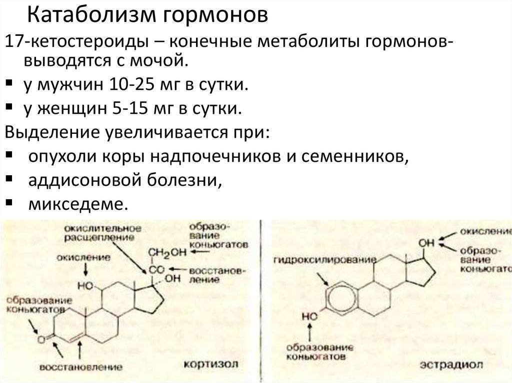 Анализы на гормоны щитовидной железы: какие сдают, норма, расшифровка | компетентно о здоровье на ilive