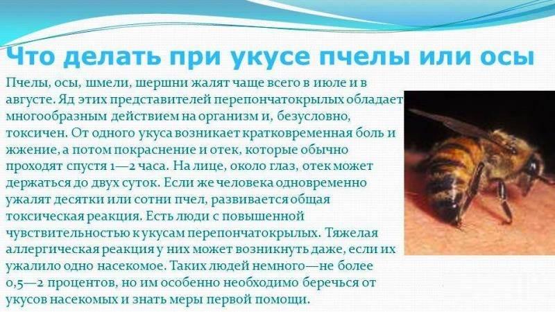 Укусы насекомых у ребенка: как снять зуд и отек