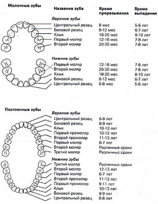 Как облегчить прорезывание зубов у детей народными средствами | народная медицина