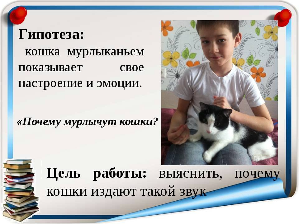 Как и чем мурлыкают кошки: примерный механизм мурчания, соотношение с психологическим состоянием, почему кошка не мурчит