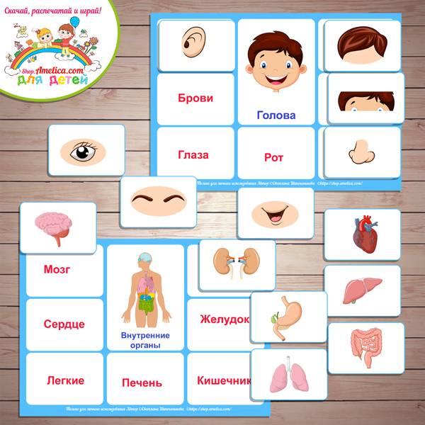 Конспект од «строение тела человека» для дошкольников с презентацией