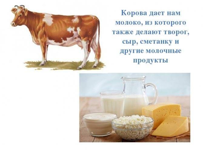 Молоко детям до года и после. какое молоко давать ребенку - козье, коровье | азбука здоровья