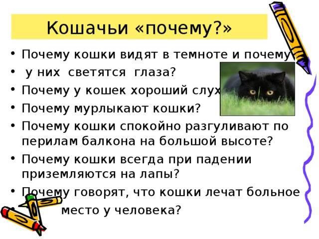 Почему кот не мурчит – причины и что это значит?